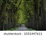 alley road on wolin island in... | Shutterstock . vector #1031447611