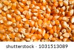 raw corn seeds or corn kernels... | Shutterstock . vector #1031513089