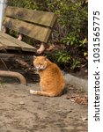 stray cats are very cute | Shutterstock . vector #1031565775