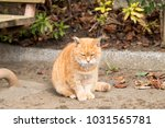 stray cats are very cute | Shutterstock . vector #1031565781