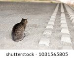 stray cats are very cute | Shutterstock . vector #1031565805