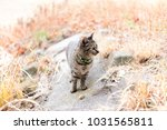 stray cats are very cute | Shutterstock . vector #1031565811