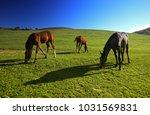 horses outdoor in ranch at... | Shutterstock . vector #1031569831