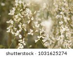 flora of gran canaria ... | Shutterstock . vector #1031625274
