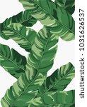 banana background background... | Shutterstock .eps vector #1031626537