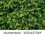 tulip field  spring festival ...   Shutterstock . vector #1031627269