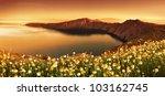 Sunrise Wildflowers on Santorini - stock photo