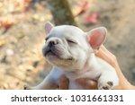 lady carrying cute little... | Shutterstock . vector #1031661331