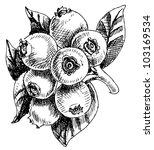bilberry   vector illustration   Shutterstock .eps vector #103169534