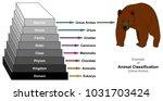 example of animal...   Shutterstock .eps vector #1031703424