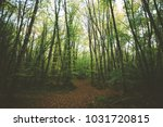 jorda beech trees  in catalan... | Shutterstock . vector #1031720815