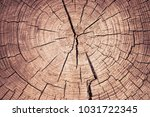 background texture of a tree... | Shutterstock . vector #1031722345