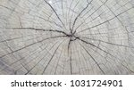 pattern of wood. | Shutterstock . vector #1031724901