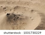 sand texture and spiral shaped... | Shutterstock . vector #1031730229