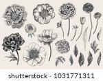set. spring flowers. peonies ... | Shutterstock .eps vector #1031771311