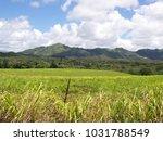 hawaiian landscapes  kauai ...   Shutterstock . vector #1031788549