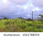 hawaiian landscapes  kauai ...   Shutterstock . vector #1031788555