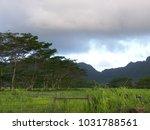 hawaiian landscapes  kauai ...   Shutterstock . vector #1031788561