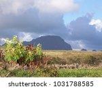 hawaiian landscapes  kauai ...   Shutterstock . vector #1031788585