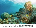 colorful underwater coral reef... | Shutterstock . vector #1031797954