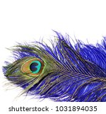 carnival peacock feathers.  | Shutterstock . vector #1031894035