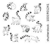 lemur animal funny vector... | Shutterstock .eps vector #1031901241
