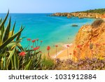 green agave plants on cliff and ... | Shutterstock . vector #1031912884