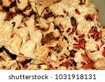 set of red cockroaches of... | Shutterstock . vector #1031918131