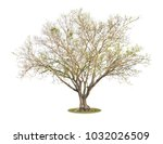 big leafless tree  bonhi ... | Shutterstock . vector #1032026509