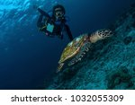 female diver with sea turtle at ... | Shutterstock . vector #1032055309