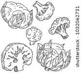 cauliflower  vegetable  vector
