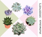 succulent flower plant vector...   Shutterstock .eps vector #1032074371