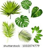 tropical leaves vector herbal... | Shutterstock .eps vector #1032074779