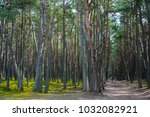 road in a pine forest with... | Shutterstock . vector #1032082921