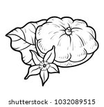 coloring book for children ... | Shutterstock .eps vector #1032089515