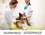 group of veterinarian examinig... | Shutterstock . vector #1032094414