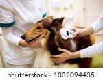 group of veterinarian chech...   Shutterstock . vector #1032094435