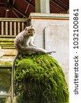 an adult monkey in monkey... | Shutterstock . vector #1032100861
