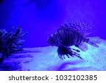 pterois zebrafish  firefish ... | Shutterstock . vector #1032102385