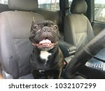 french bulldog sit in the car... | Shutterstock . vector #1032107299