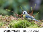 blue tit watching you | Shutterstock . vector #1032117061