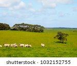 nice view of great ocean road ... | Shutterstock . vector #1032152755
