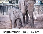 mother and child elephant | Shutterstock . vector #1032167125