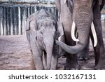 mother and child elephant | Shutterstock . vector #1032167131