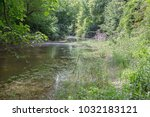 alluvial forest on the... | Shutterstock . vector #1032183121