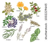 medical and cosmetics plants.... | Shutterstock .eps vector #1032229645