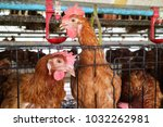 chicken farm business with high ... | Shutterstock . vector #1032262981