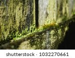 moss close up green background... | Shutterstock . vector #1032270661