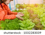 hydroponics vegetable farming... | Shutterstock . vector #1032283039