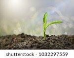 shoot the trees | Shutterstock . vector #1032297559